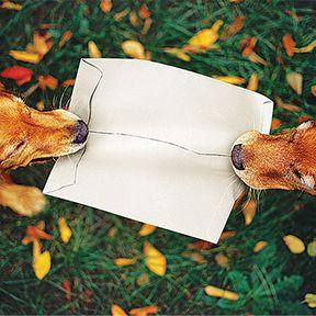Envelopes de Tyvek®